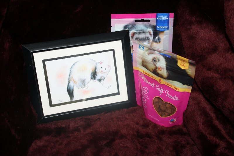 45. Ferret print w/treats