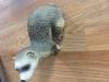 109. Ferret figurine